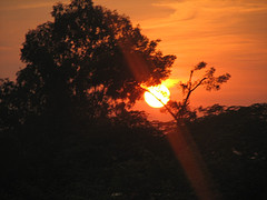 Sun Set through tree