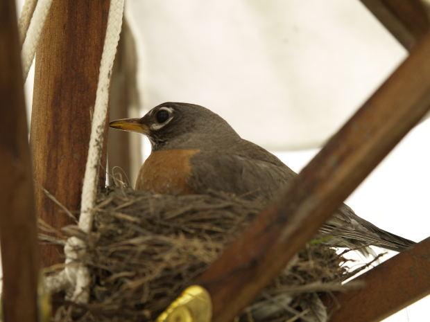 bird-nest-branches
