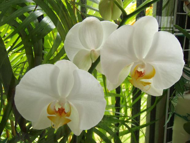Ketki Flower Images - Best Image - 86.2KB
