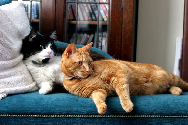 brown-and-white-cats