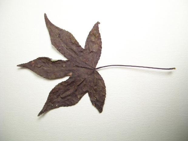 dry-leaf