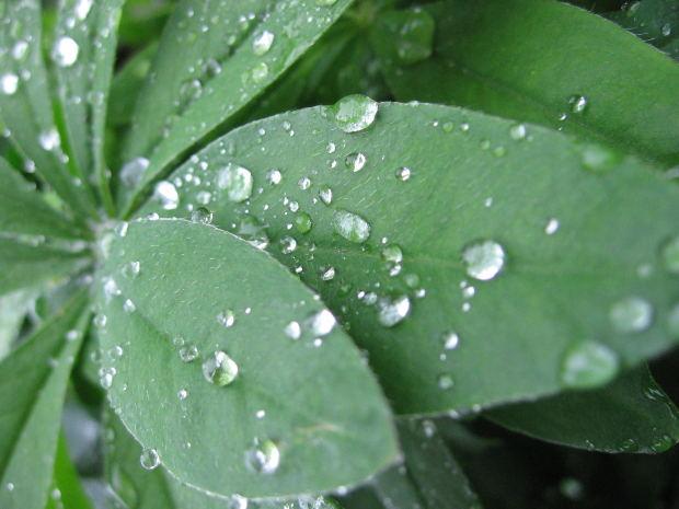 rain-drops-on-leaf