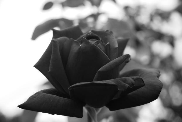 Thriller Mystery Short Story - BLACKROSE- THE HOUSE OF GHOST