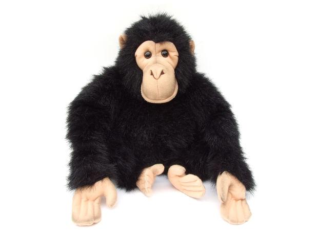Ape Monkey