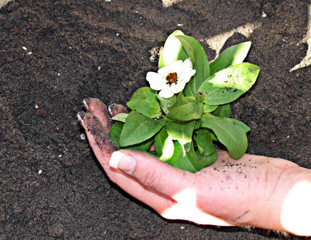 Social-Short-Story-Moral-new-plant-mud-hand