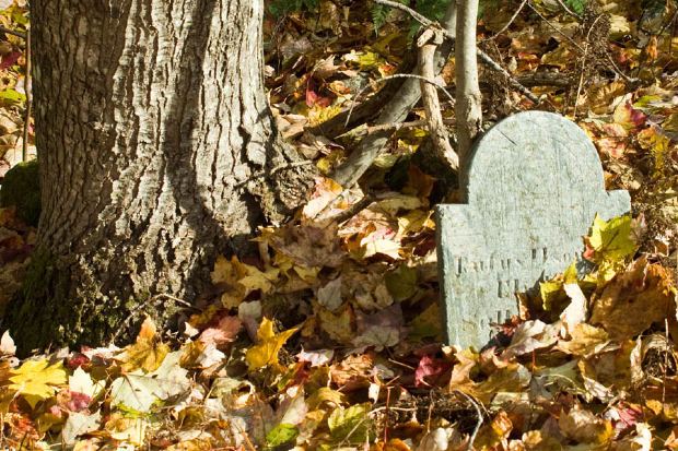 Short-Story-Remembrance-fall-grave-tree-leaves