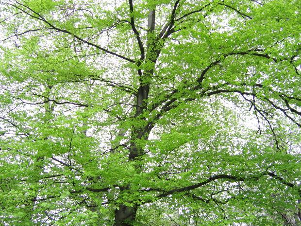 single-tree-green