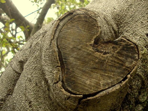 love-mark-tree-stem