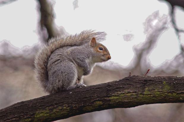 squirrel-tree
