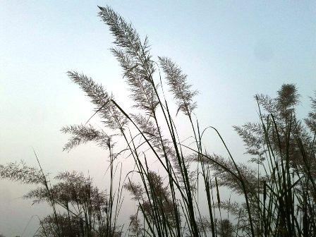 grains-field-blue-sky