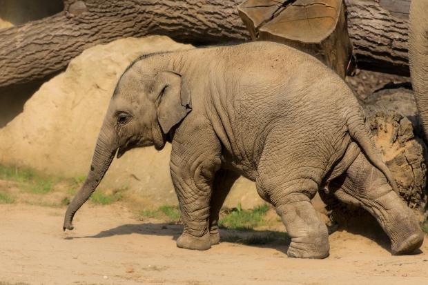 baby-elephant-green