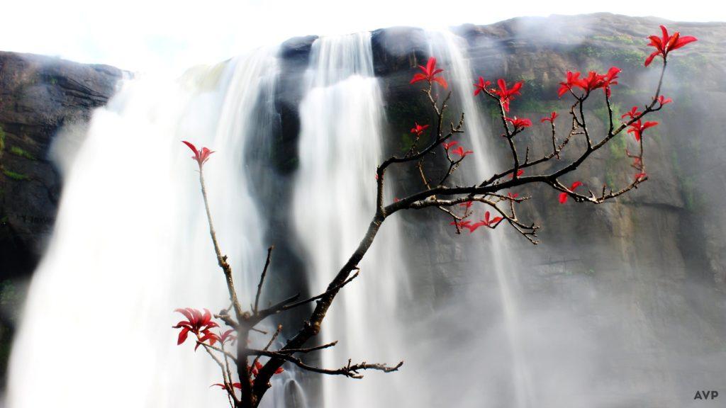 water-fall-flower